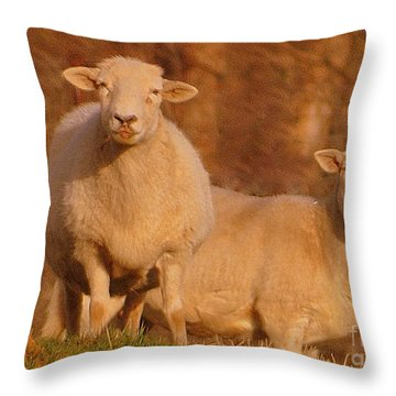 Throw Pillow featuring the photograph My Sheep ...   by Lydia Holly