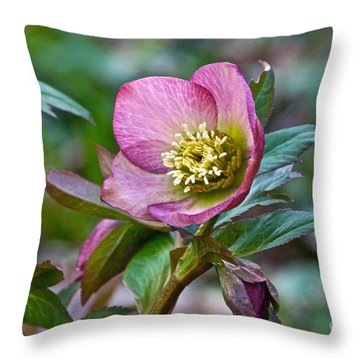 My Wild Xmas Rose Throw Pillow by Byron Varvarigos