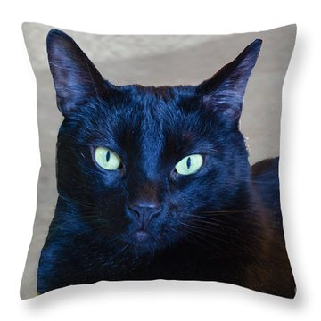 Mysterious Black Cat Throw Pillow by Luther Fine Art