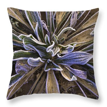 Throw Pillow featuring the photograph Mystery Plant by Sherri Meyer