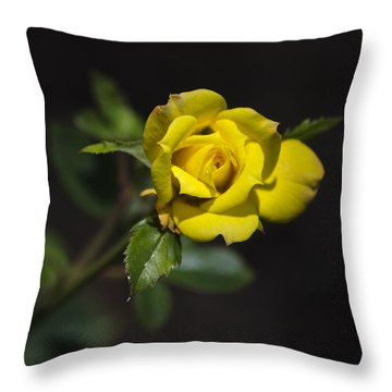 Mystic Yellow Rose Throw Pillow by Christina Rollo