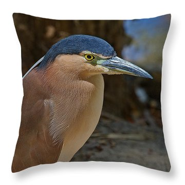 Nankeen Or Rufous Night Heron Throw Pillow by Mr Bennett Kent