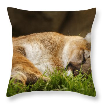 Throw Pillow featuring the photograph Nap Time  by Brian Cross