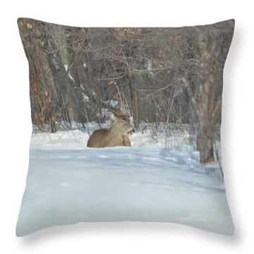 Throw Pillow featuring the photograph Nap Time by Dacia Doroff