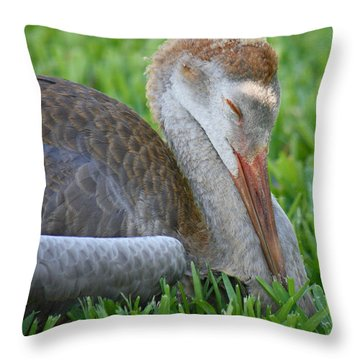 Napping Sandhill Baby Throw Pillow by Carol Groenen