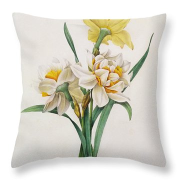 Narcissus Gouani Throw Pillow by Pierre Joseph Redoute