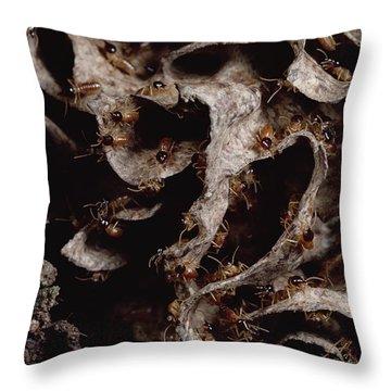 Nasute Termite Nest Amazonian Peru Throw Pillow by Mark Moffett