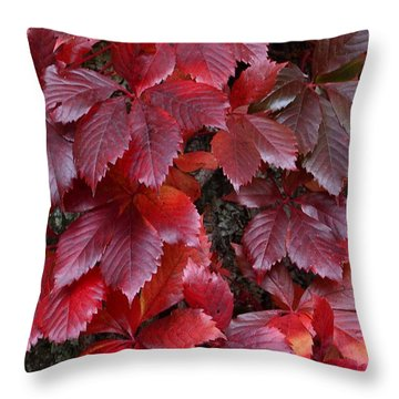 Natural Beauty Throw Pillow by Randy Bodkins