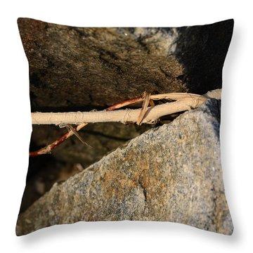 Natural Maths Throw Pillow by Rebecca Sherman