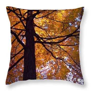 Valerie Paterson Throw Pillows