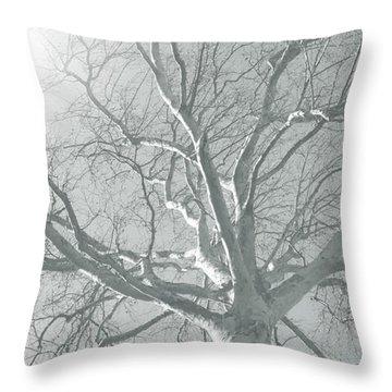 nature - art - Winter Sun  Throw Pillow by Ann Powell