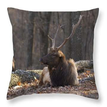 Nature At Rest Throw Pillow