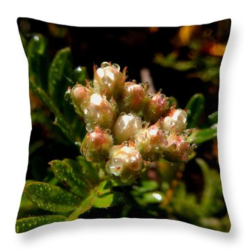Nature's Drink Throw Pillow by Pamela Walton