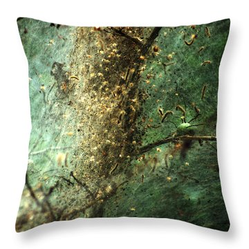 Natures Past Captured In A Web Throw Pillow by Kim Pate