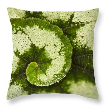 Natures Spiral Throw Pillow