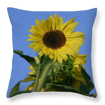 Nature's Sunshine Throw Pillow
