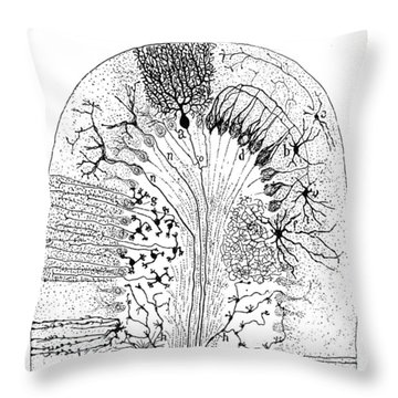 Nerve Cells, 1894 Throw Pillow by Granger