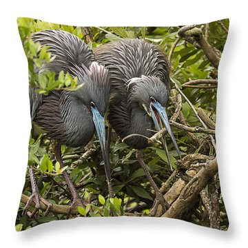 Throw Pillow featuring the photograph Nest Building by Priscilla Burgers