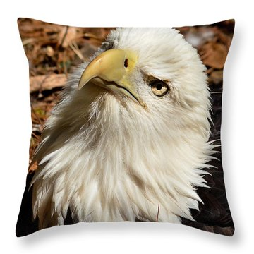 Nesting Eagle Portrait Throw Pillow by Kathy Baccari