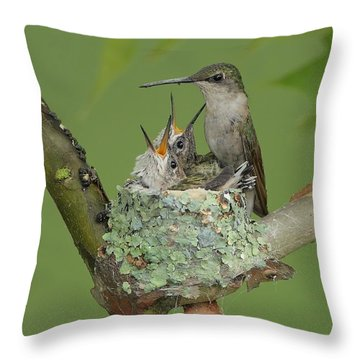 Throw Pillow featuring the photograph Nesting Hummingbird Family by Daniel Behm
