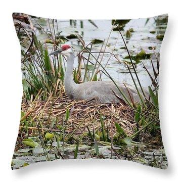 Nesting Sandhill Crane Throw Pillow by Carol Groenen