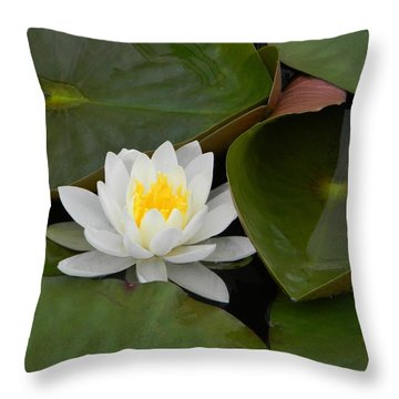 Nestle In Throw Pillow by Jean Goodwin Brooks