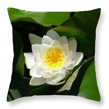 Throw Pillow featuring the photograph Nestled-in-leaves by Nora Boghossian