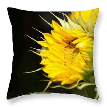 New Beginnings Throw Pillow by Lisa Knechtel
