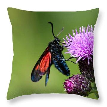 New Forest Burnet  Throw Pillow