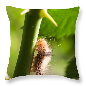 New Life Is Born Throw Pillow
