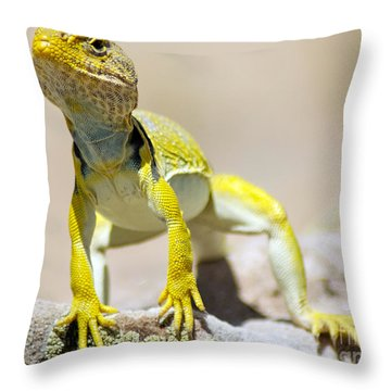 New Photographic Art Print For Sale Yellow Lizard Ghost Ranch New Mexico Throw Pillow