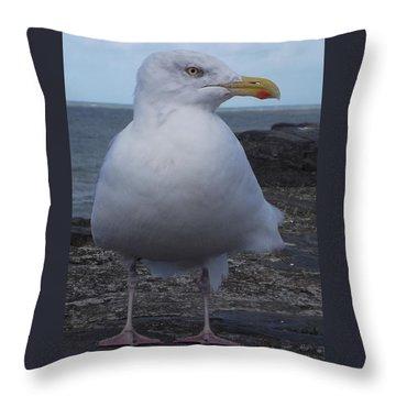New Quay Gull  Throw Pillow