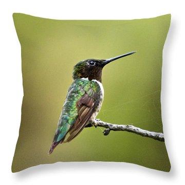 New York Hummingbird Throw Pillow by Christina Rollo