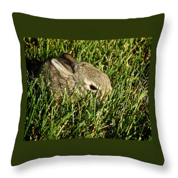 The Baby Cottontail Throw Pillow