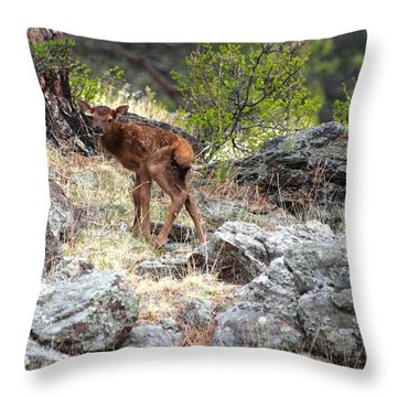Newborn Elk Calf Throw Pillow