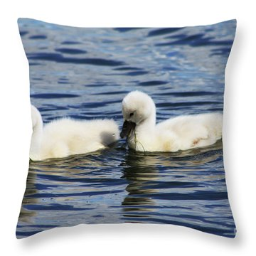 Newborn Mute Swans Throw Pillow by Alyce Taylor