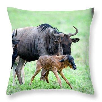Newborn Wildebeest Calf Throw Pillow
