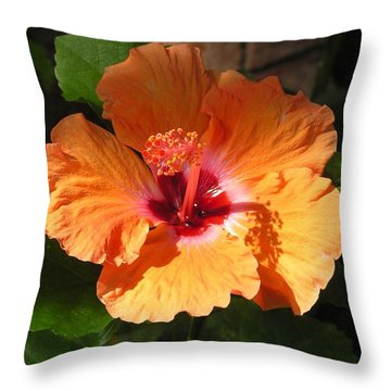 Newcomer Again  Throw Pillow