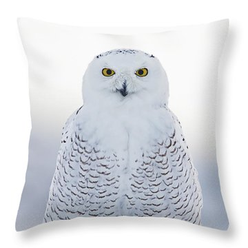 Nh Seacoast Snowy Owl  Throw Pillow