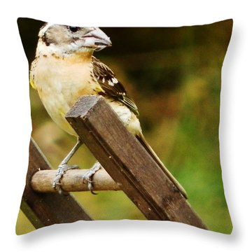 Throw Pillow featuring the photograph Nice View by VLee Watson