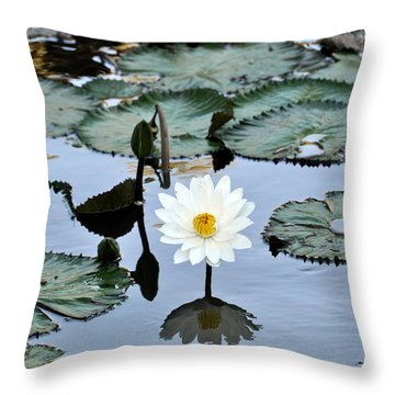 #night Blooming Water Lily Throw Pillow