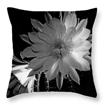 Nightblooming Cereus Cactus Flower Throw Pillow