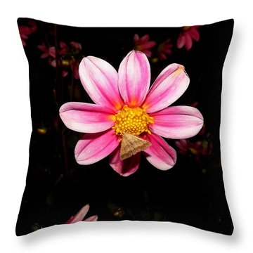 Nighttime Visitor Throw Pillow