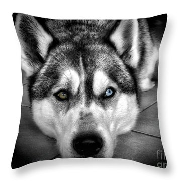 Niko Throw Pillow by Karen Lewis