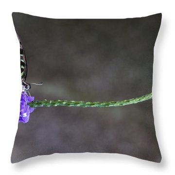 Butterfly - Tailed Jay II Throw Pillow