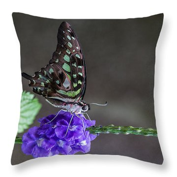 Throw Pillow featuring the photograph Butterfly - Tailed Jay II by Patti Deters