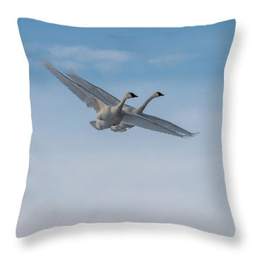 Trumpeter Swans Tandem Flight Throw Pillow by Patti Deters
