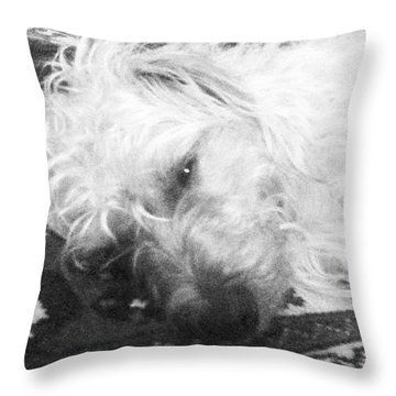Norfolk Terrier In Black And White Throw Pillow