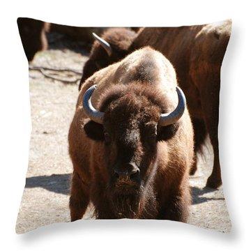 North American Bison Throw Pillow by DejaVu Designs