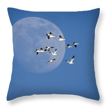 Throw Pillow featuring the photograph North Bound by Jack Bell